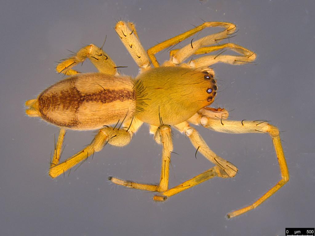 3a - Araneae sp.