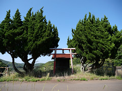 Wicked looking trees on the dam shrine