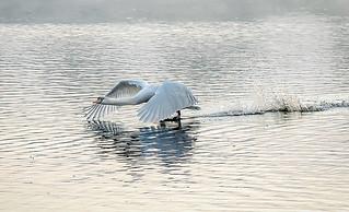 Ballet on Swan Lake3