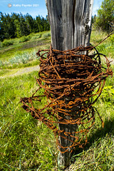Barbed Wire 3947
