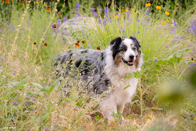 Meadow Dog (22/52)