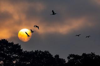 Sunrise on the Heath