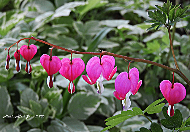 May Flowers in my Garden - N6