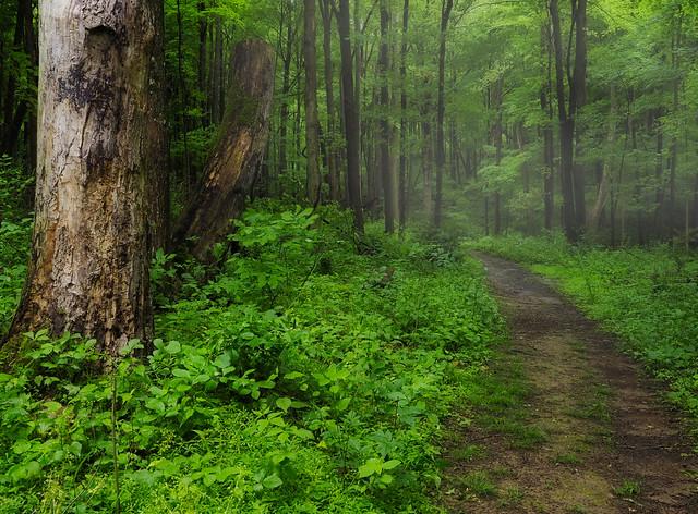 Braddock's Trail Park