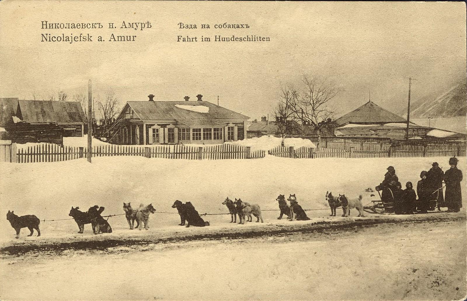 Езда на собаках