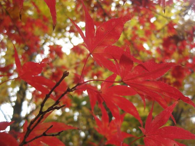 Splashes of Red - Bright