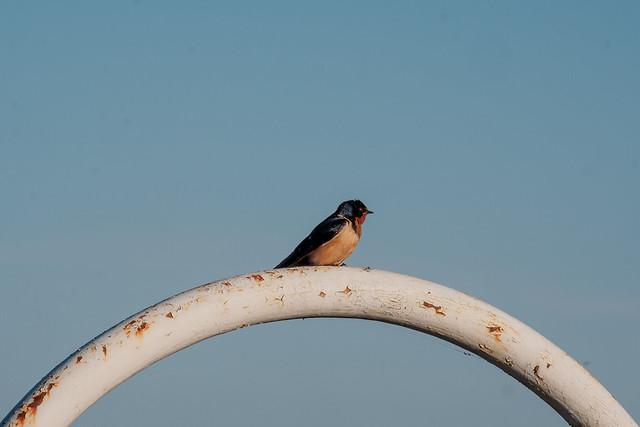20210530 bird on an arch