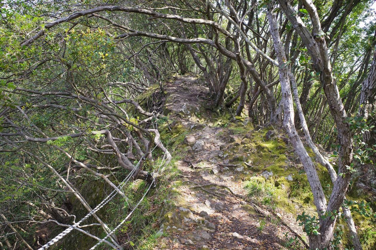 沼津アルプス縦走登山・鷲頭山から大平山へ