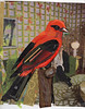 29 MAY Scarlet Tanager