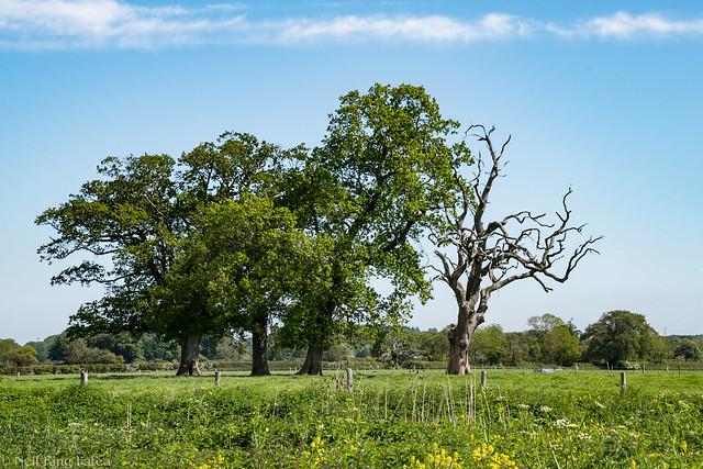 Trees - Photocredit Neil King-1