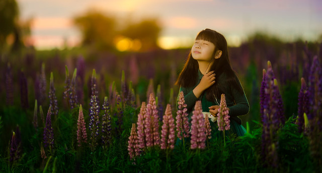 In a field of wild lupine