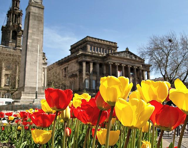 Spring tulips in the centre of Preston