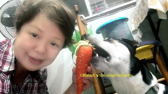 สุนัขกิน carrot