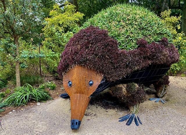 Ant eater blending in at the Botanic Gardens in Sydney