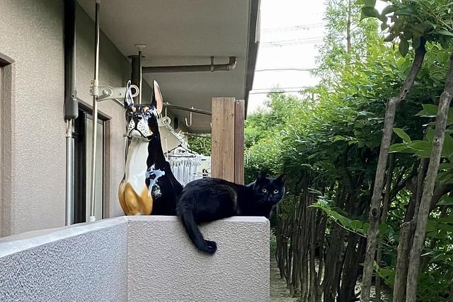 Today's Cat@2021−05−31