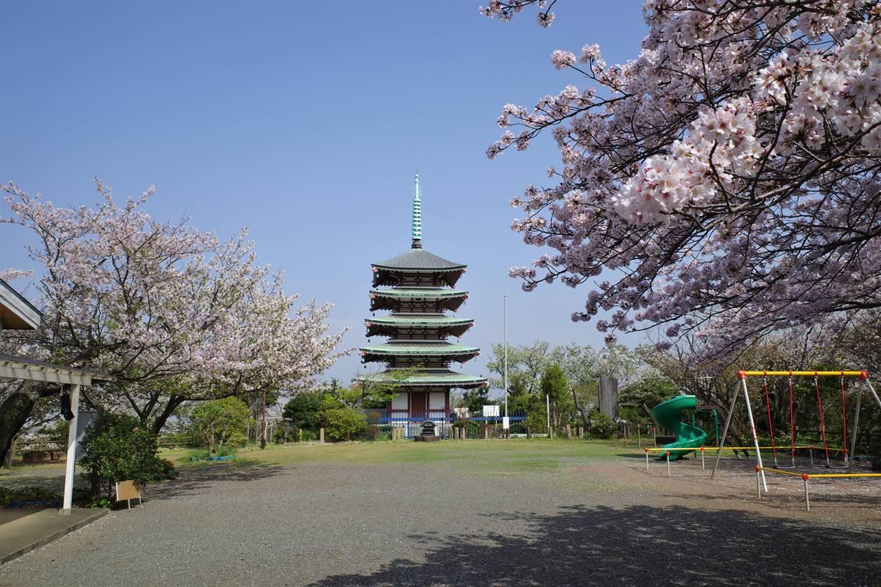 香貫山公園 桜と五重塔