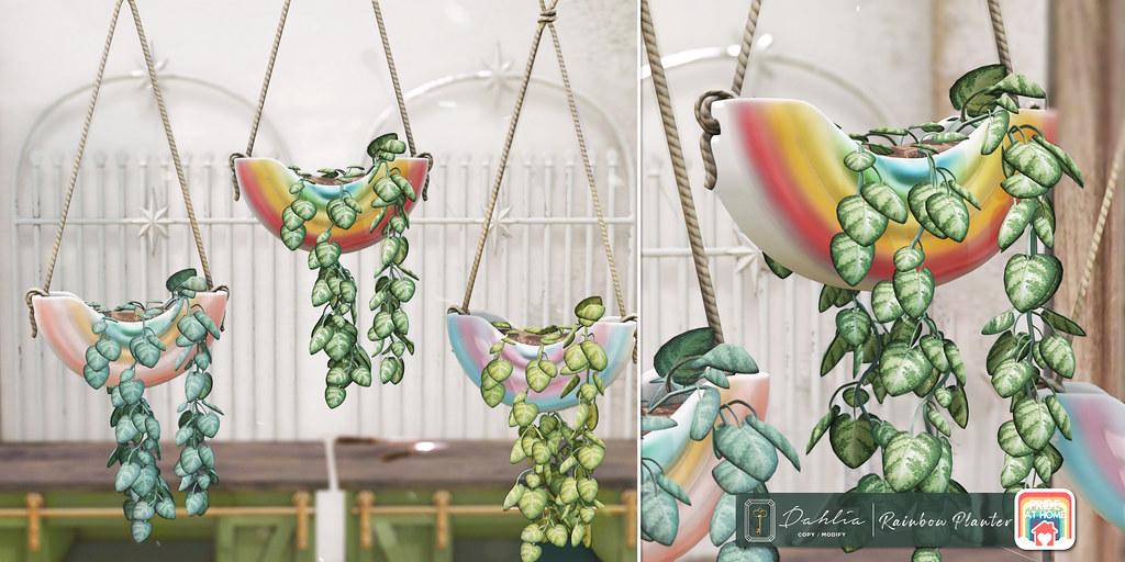 Dahlia – Rainbow Planter – Pride At Home