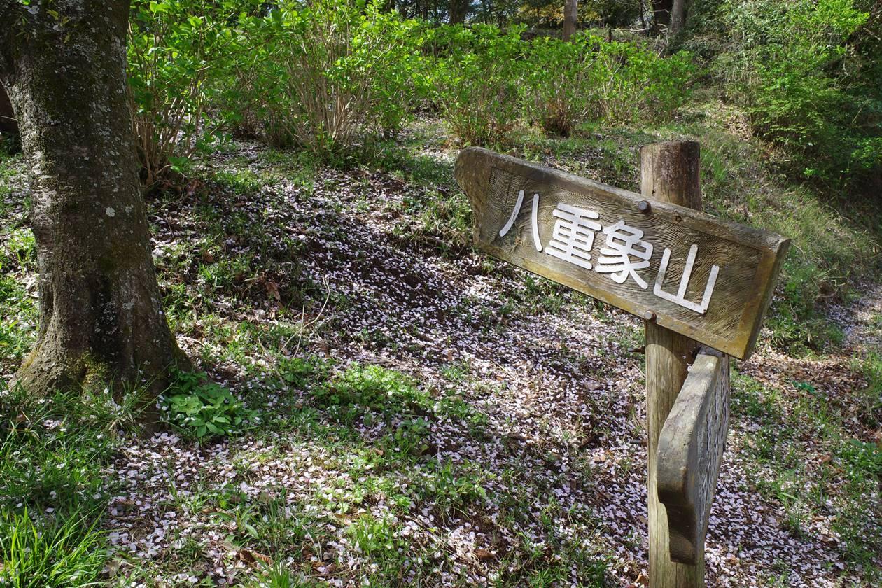香貫山から八重象山へ