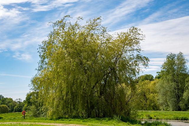 Trees - Photocredit Neil King-2