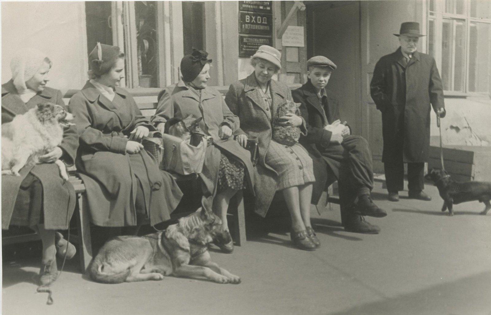 1955-1957. Ветеринарная больница