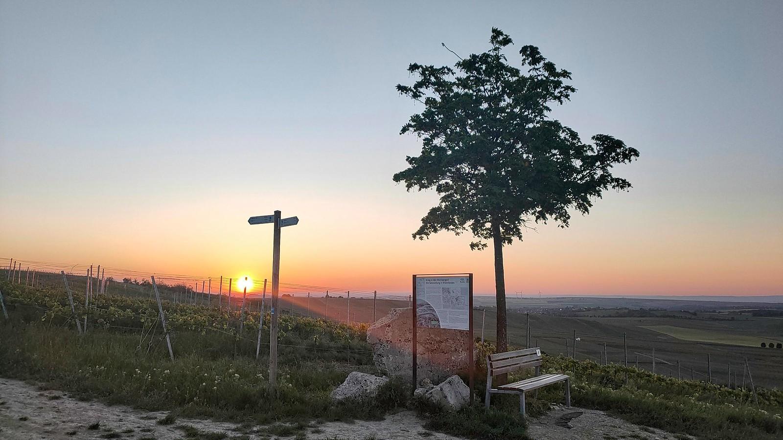 Sonnenaufgang an der Selzstellung (Hiwweltour Zornheimer Berg)
