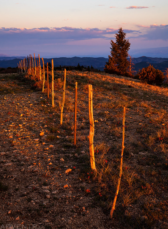 Fenceline Light