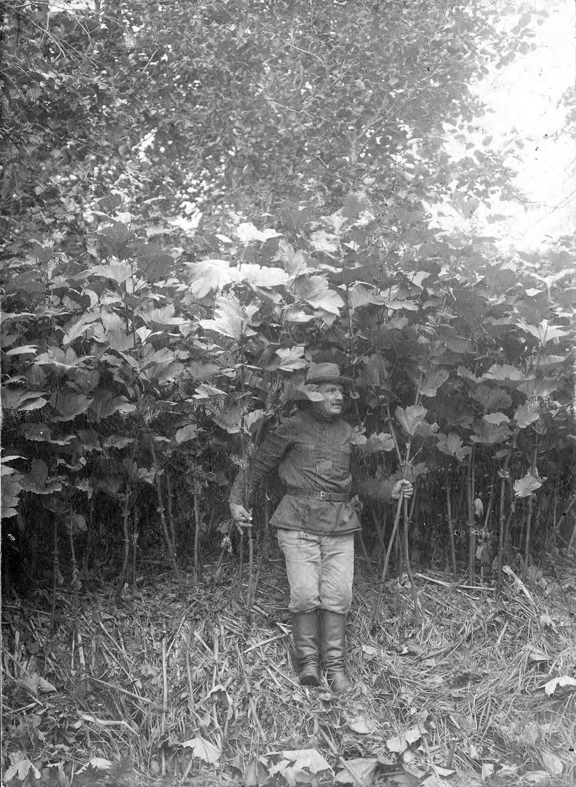 1910. Заросли лабазника (шеломайника).