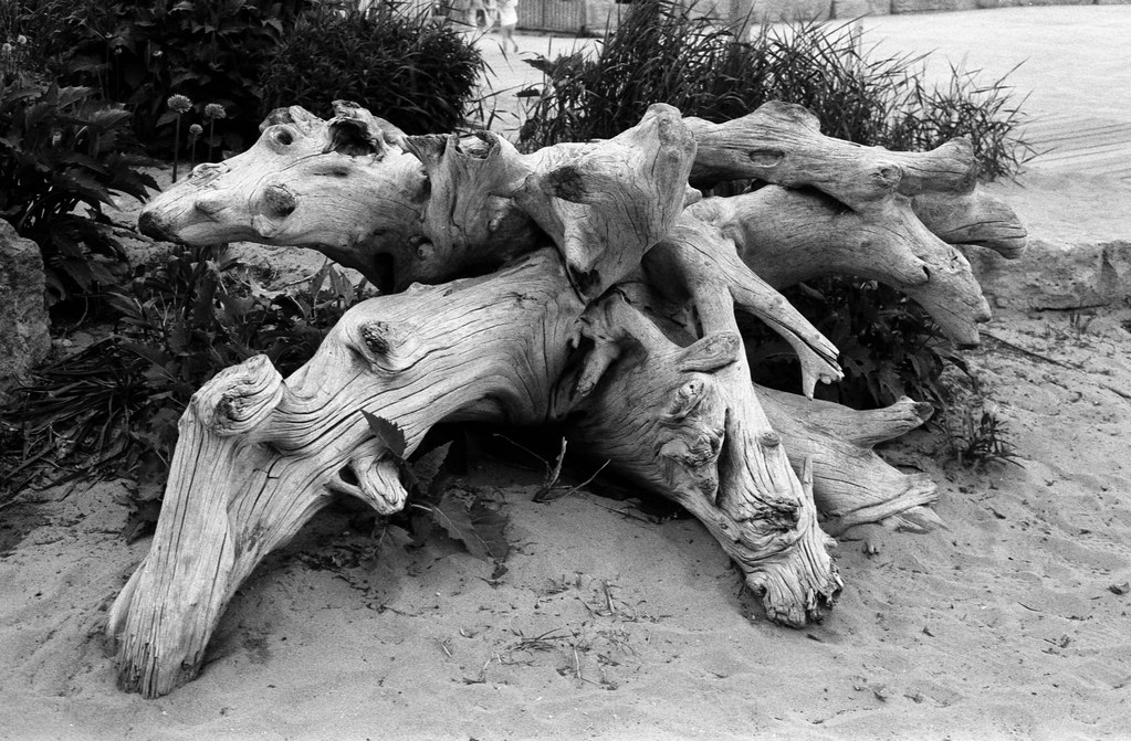 Study in Driftwood