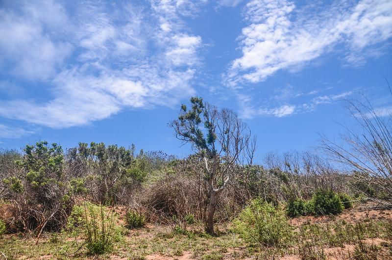 南太平頂山登山路徑 1