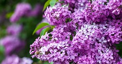 cerini-pavasaris-cerins-52164745