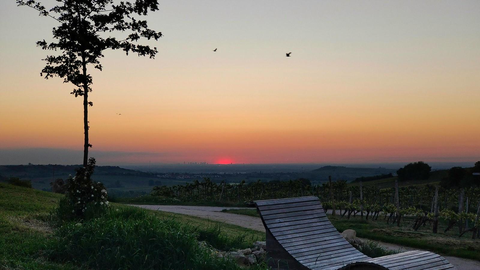 Schönste Weinsicht 2020 Rheinhessen mit Sonnenaufgang über Frankfurt