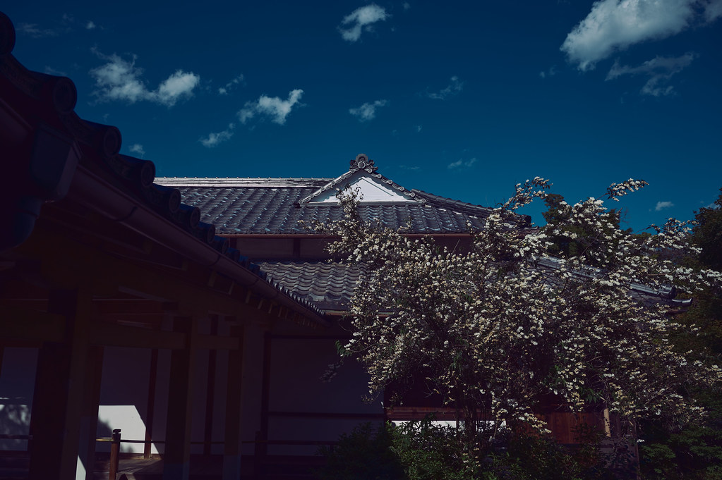 Kyoto Hokyoin Temple in Early Summer