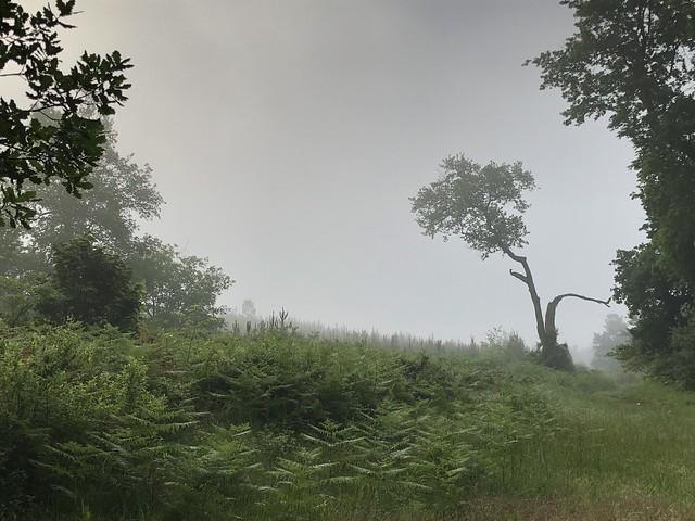 matin brumeux / nebliger Morgen / туманное утро
