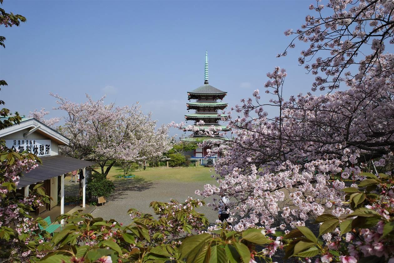 【登山】香貫山 桜と五重塔