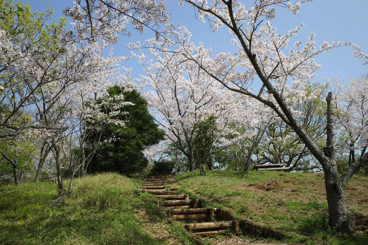 桜満開の沼津アルプス縦走