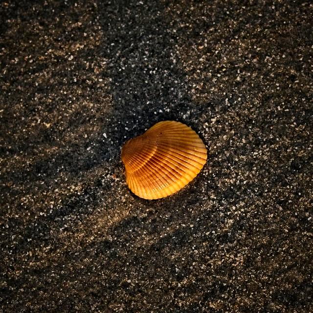 Seashell Sunday