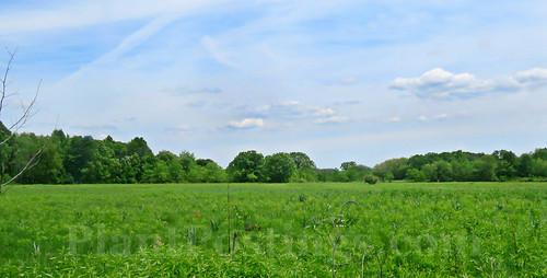 prairie late spring