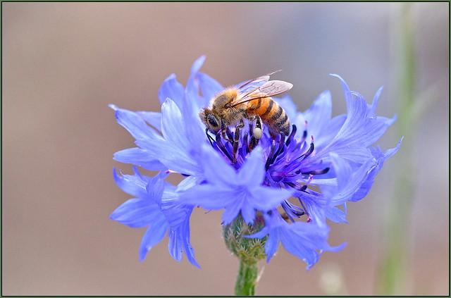 Morning Nectar Duties