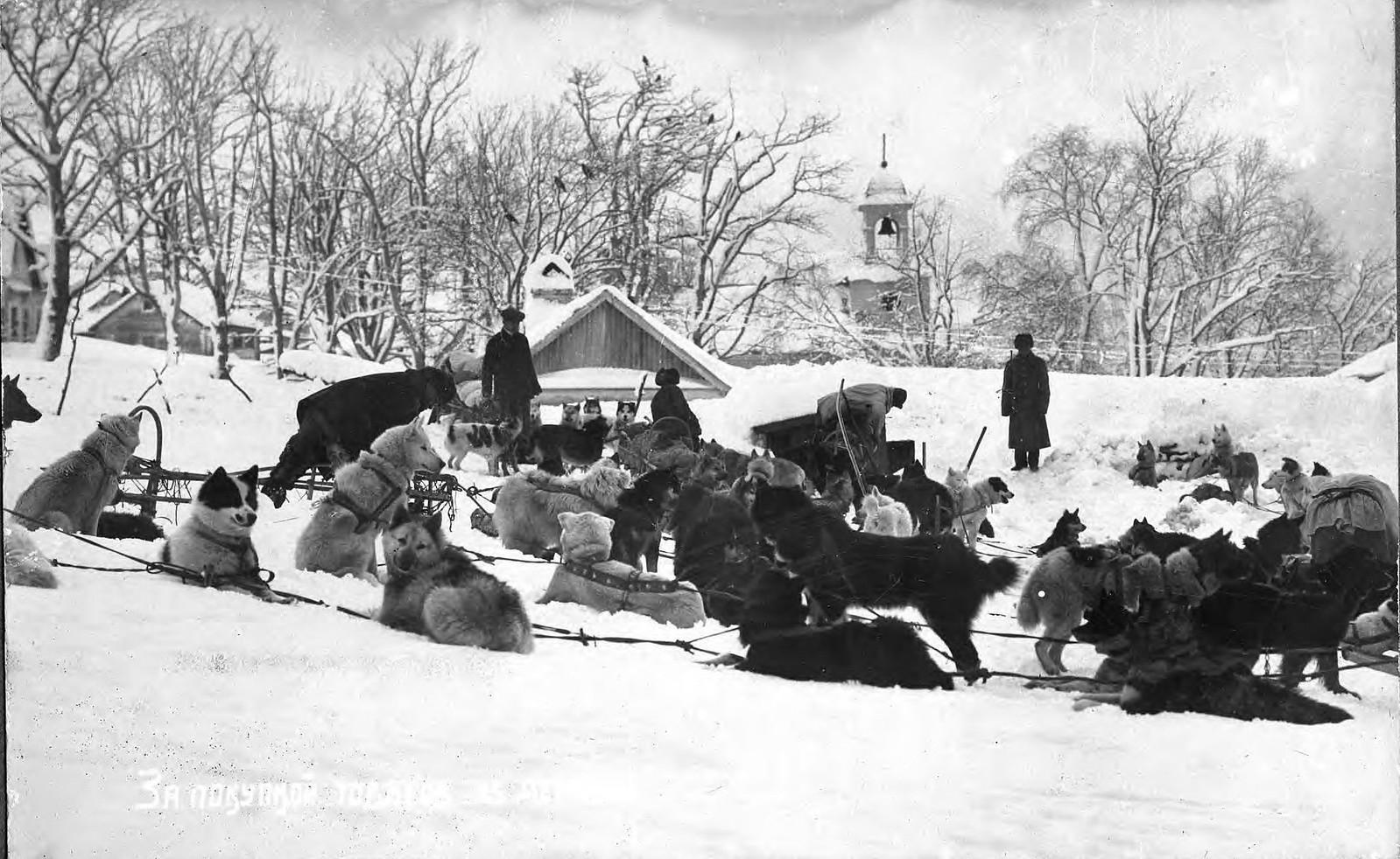 1910. Собачьи упряжки на фоне Петропавловского собора