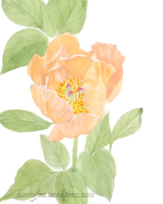 orange peony sketch