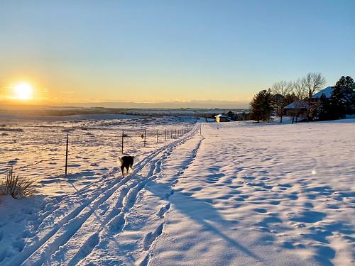 Sunset dog ski