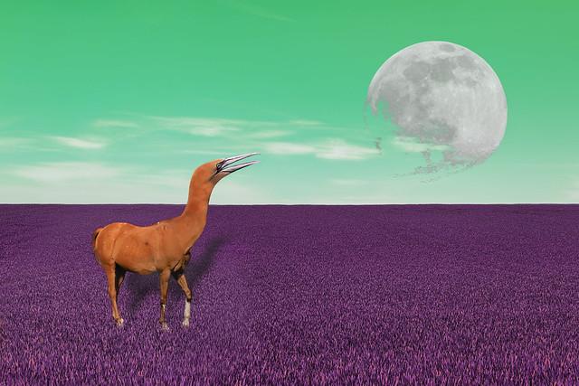 Equus bassanus ou/or Morus caballus ?