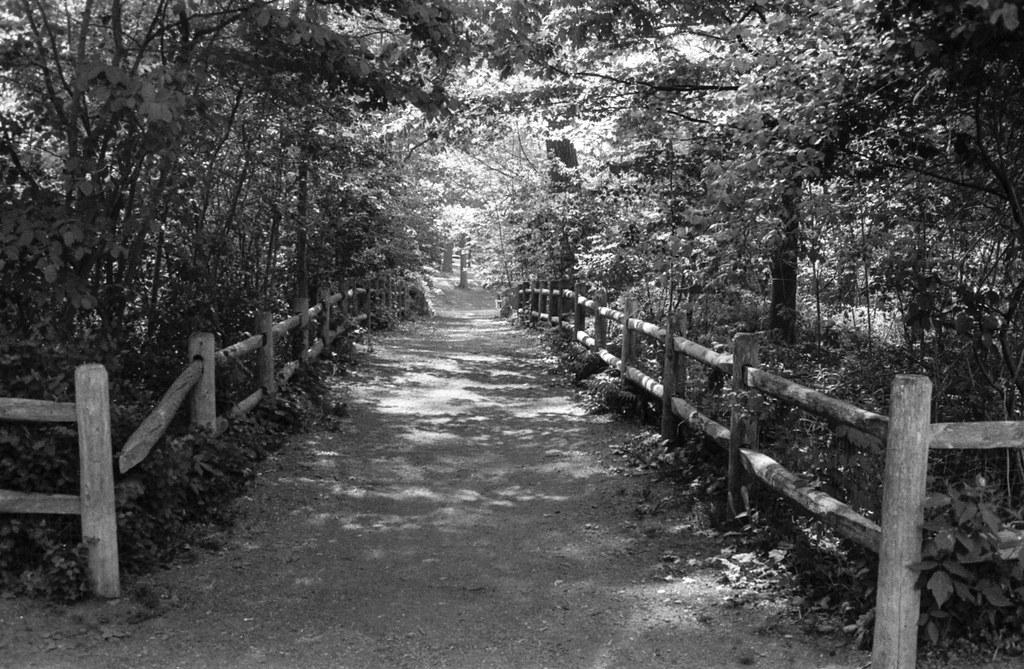 Path Through the Wilderness Portion of Kew Gardens_