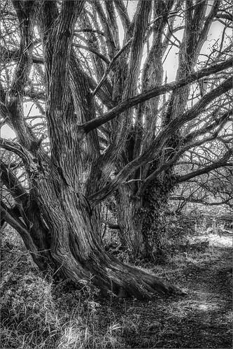 autumn fall nature tree landscape mechelen muizen blackandwhite bw monochrome