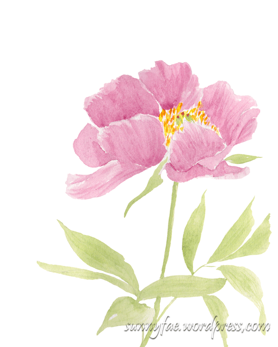 pink peony watercolour sketch