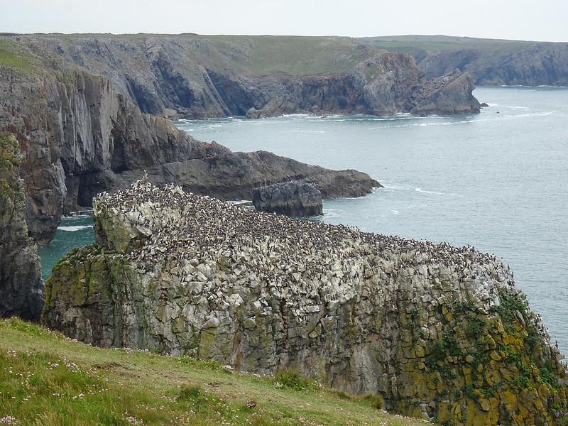 Stacks and Seabirds, Freshwater West to Bosherton, around the Castlemartin Peninsula