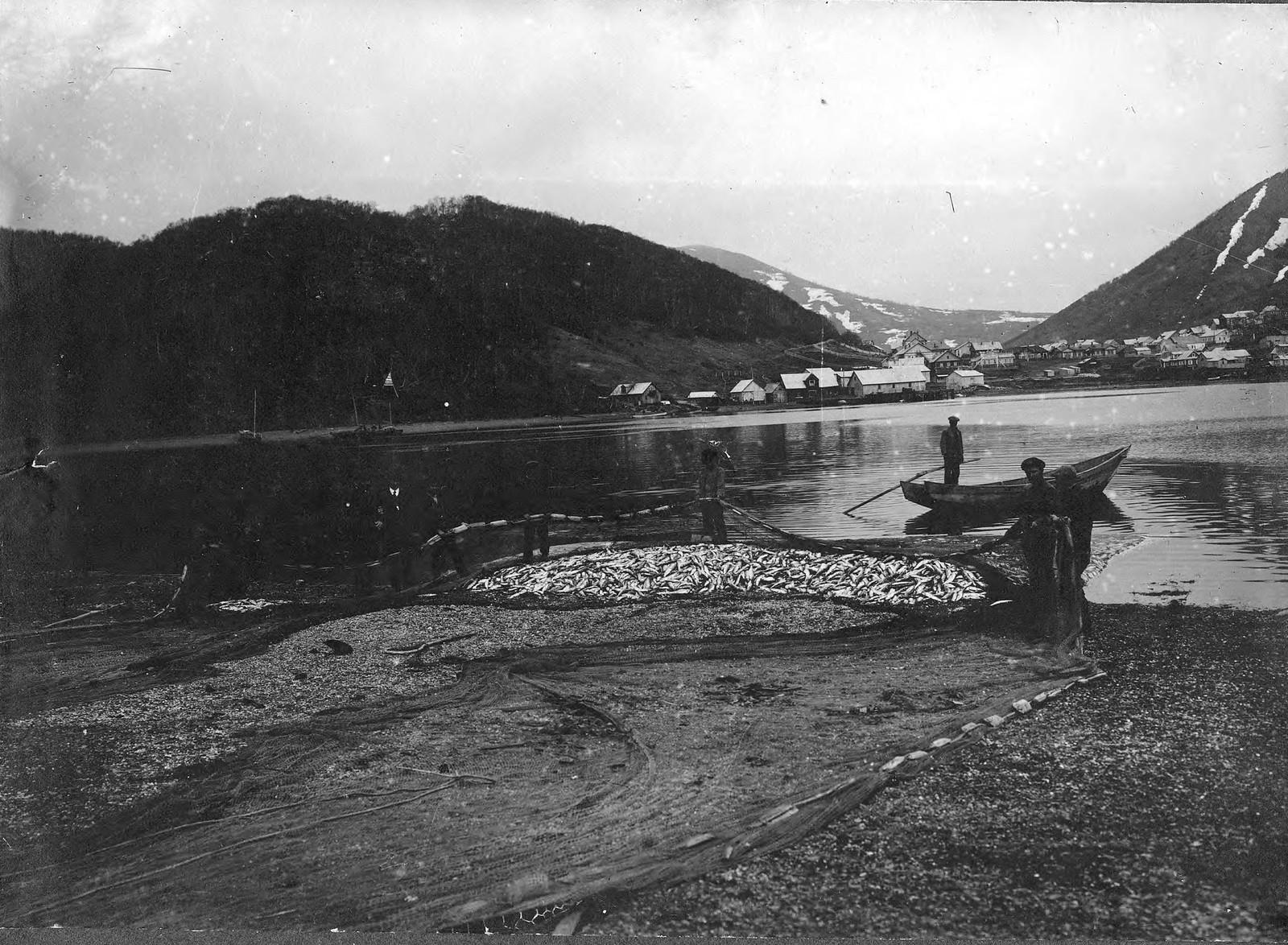 1920. Лов сельди в Петропавловской гавани