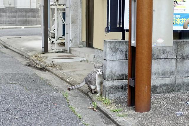Today's Cat@2021−06−01