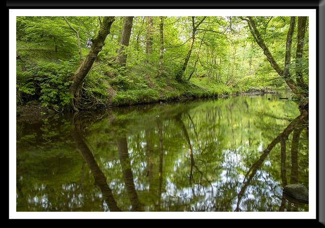 Bradshaw River Reflections