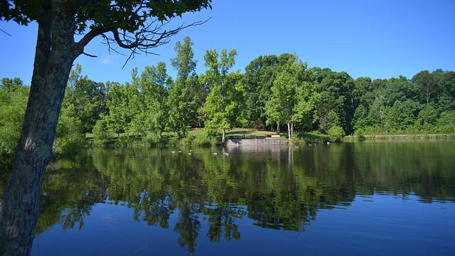 The lake at Lenora Park